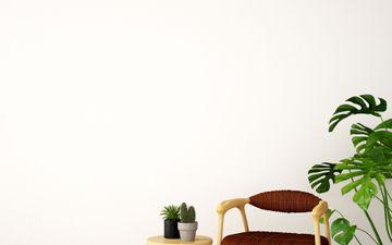 White Wall & Plant