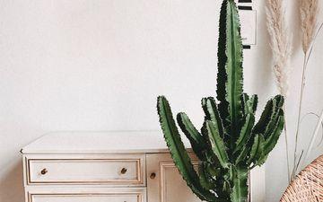 Cactus (IG)